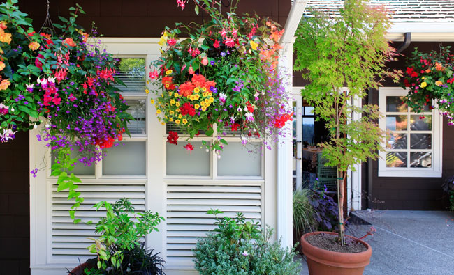 Enjoy hanging plants patio pots